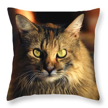 Main Coone Throw Pillow by David Lee Thompson