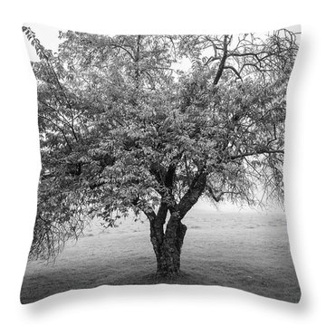 Throw Pillow featuring the photograph Maine Apple Tree In Fog by Ranjay Mitra