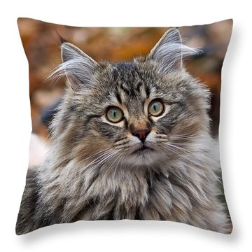 Maine Coon Cat Throw Pillow by Rona Black