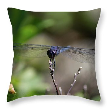 Throw Pillow featuring the photograph Maine Dragonfly by Kirkodd Photography Of New England