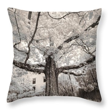 Throw Pillow featuring the photograph Maine Neighborhood Tree by Craig J Satterlee