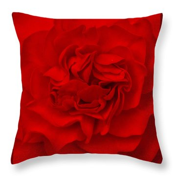 Throw Pillow featuring the photograph Majestic Begonia  by Lynn Hughes