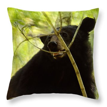 Majestic Black Bear Throw Pillow