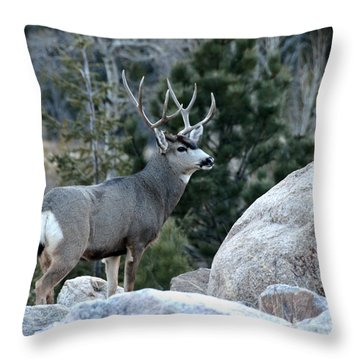 Majestic Buck Throw Pillow