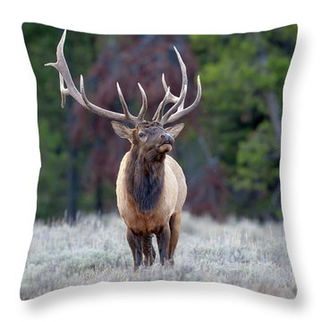 Majestic Bull Elk Throw Pillow by Jack Bell