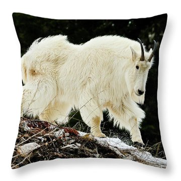 Majestic Mountain Goat Throw Pillow by Greg Norrell