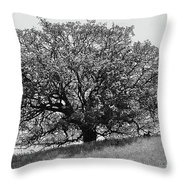 Majestic Oak Throw Pillow by Suzette Kallen
