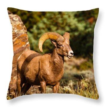 Majestic Ram Throw Pillow