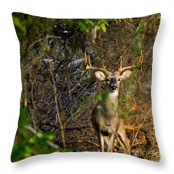 Majestic Whitetail Throw Pillow