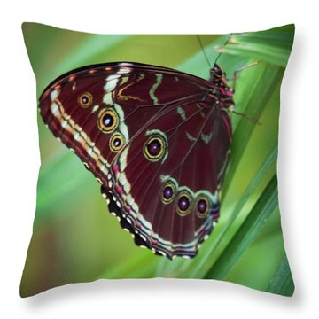 Majesty Of Nature Throw Pillow by Karen Wiles