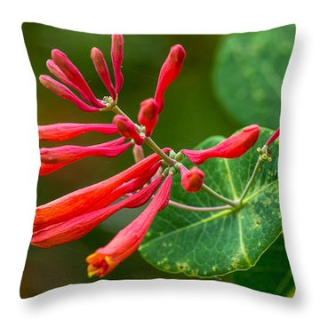 Major Wheeler Honeysuckle  Throw Pillow