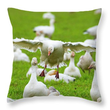 Throw Pillow featuring the photograph Make Room by Mike Dawson