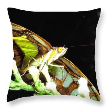 Malachite Butterfly Throw Pillow by Thomas R Fletcher