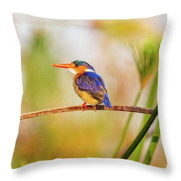 Malachite Kingfisher Hunting Throw Pillow