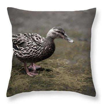 Malard,duckling Throw Pillow