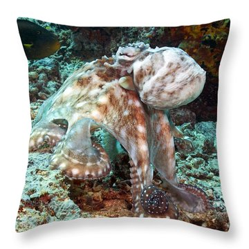 Malaysia, Octopus Throw Pillow by Dave Fleetham - Printscapes