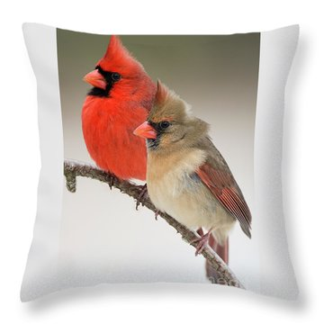 Male And Female Northern Cardinals On Pine Branch Throw Pillow