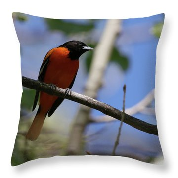 Male Baltimore Oriole Throw Pillow