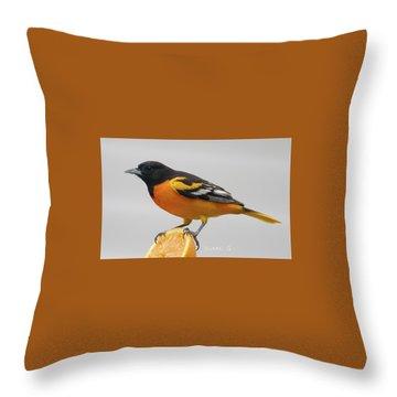 Male Baltimore Oriole Throw Pillow