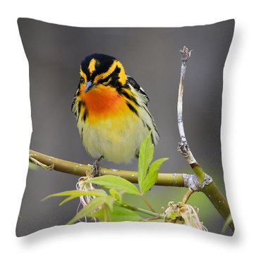 Male Blackburnian Warbler Throw Pillow