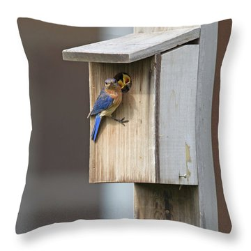 Male Bluebird And Babies Throw Pillow