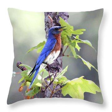 Male Bluebird Throw Pillow