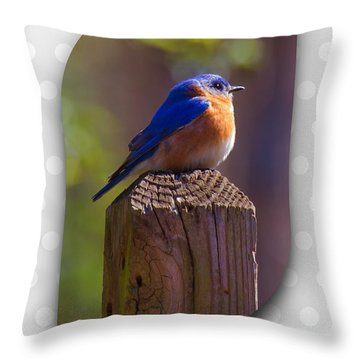Throw Pillow featuring the photograph Male Bluebird by Robert L Jackson