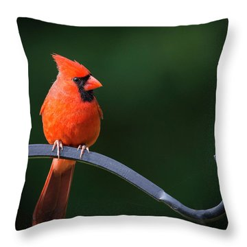 Male Cardinal At The Feeder Throw Pillow