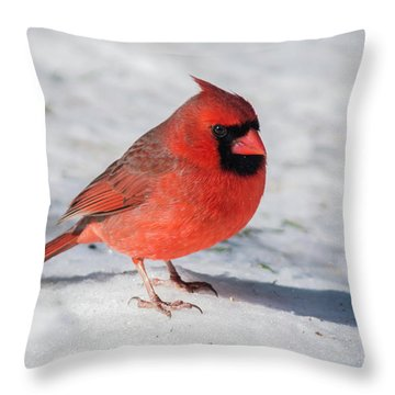 Male Cardinal In Winter Throw Pillow by Kenneth Cole