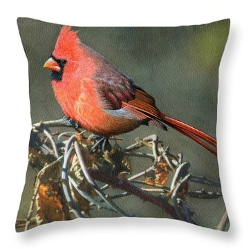 Male Cardinal Throw Pillow by Ken Everett