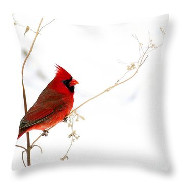 Male Cardinal Posing In The Snow Throw Pillow by Randall Branham