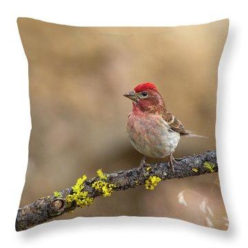 Male Cassins Finch Throw Pillow