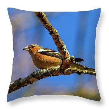 Male Common Chaffinch Bird, Fringilla Coelebs Throw Pillow by Elenarts - Elena Duvernay photo
