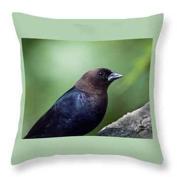 Male Cowbird Throw Pillow by Diane Giurco