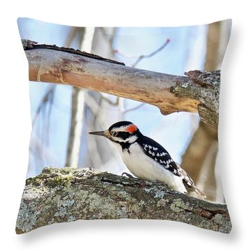 Male Downey Woodpecker 1112 Throw Pillow by Michael Peychich