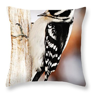 Male Downy Woodpecker 3 Throw Pillow by Larry Ricker