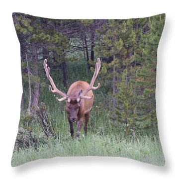 Bull Elk Rmnp Co Throw Pillow