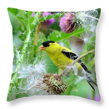 Male Goldfinch Throw Pillow