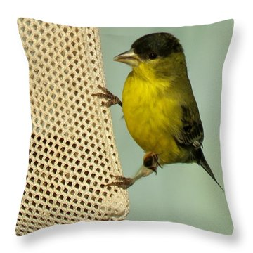 Male Goldfinch On Sock Feeder Throw Pillow