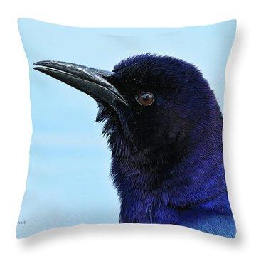 Throw Pillow featuring the photograph Male Grackle Beauty by Deborah Benoit
