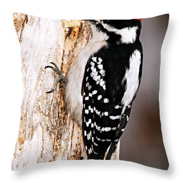 Male Hairy Woodpecker Throw Pillow by Larry Ricker