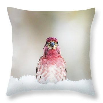 Male House Finch Throw Pillow
