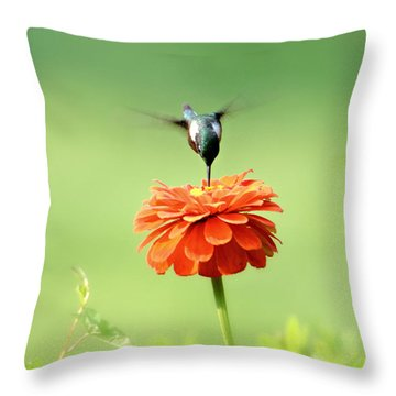 Throw Pillow featuring the photograph Male Hummingbird by Lila Fisher-Wenzel