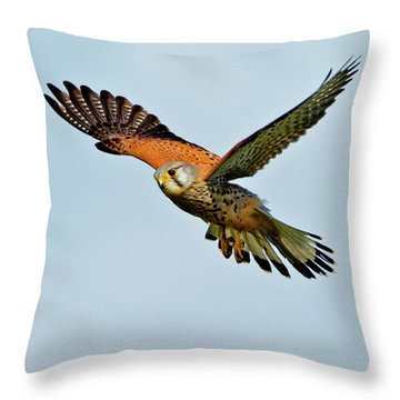 Male Kestrel In The Wind. Throw Pillow