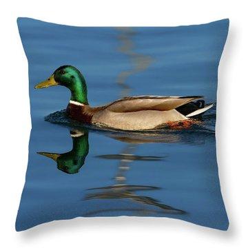 Male Mallard Or Wild Duck, Anas Platyrhynchos, Portrait Throw Pillow