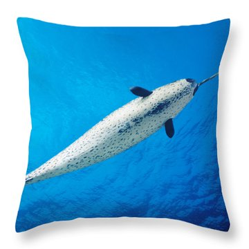 Male Narwhal Throw Pillow by Dave Fleetham - Printscapes