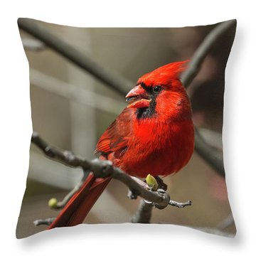 Male Northern Cardinal In Spring Throw Pillow