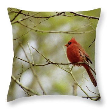 Male Northern Cardinal Throw Pillow by Michael Peychich
