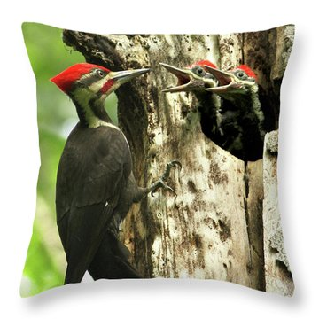 Male Pileated Woodpecker At Nest Throw Pillow