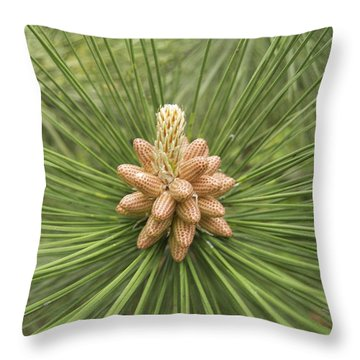 Male Pine Cones  Throw Pillow by Michael Peychich